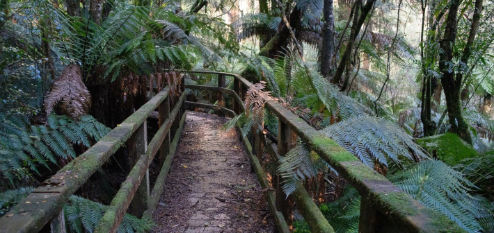 Victoria Walks: Country Walk ideas. Photo by Julia Romanieux (Myrtle Gully Creek walk)