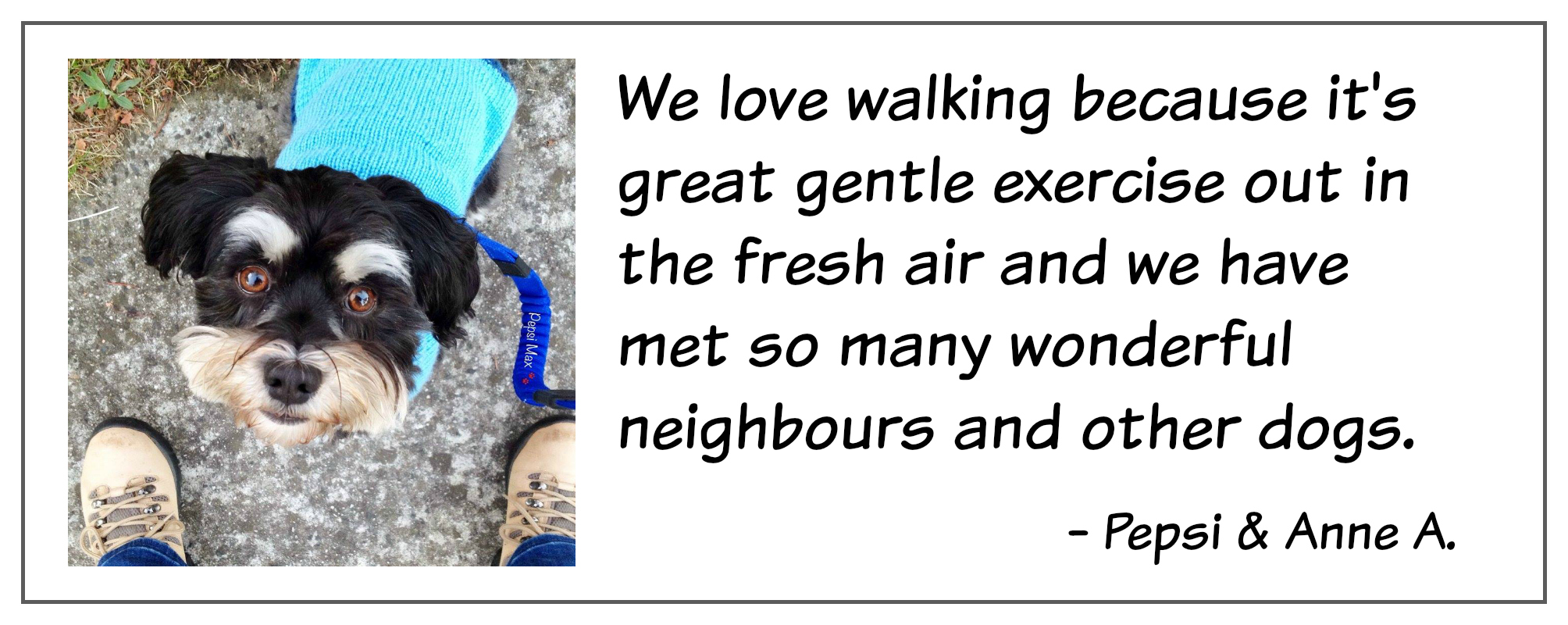 Dog walking quote