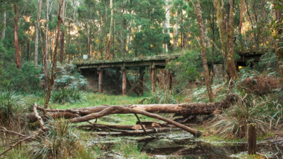 Victoria Walks Domino Rail Trail walk, Lyonville to Trentham. For Great Weekend Walks article. 560x315.