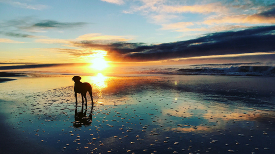 Doug at sunrise, McGaurans Beach Gippsland. Photo: Trilby Steinberger.