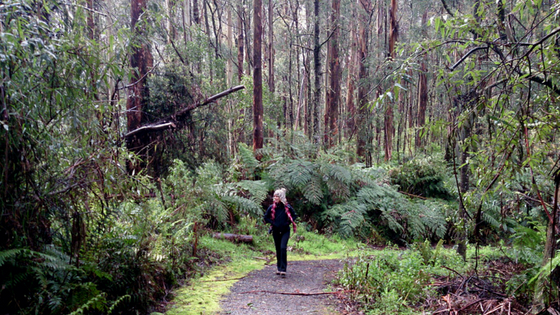 Tarra Bulga rainforest walk for Weekend Escapes