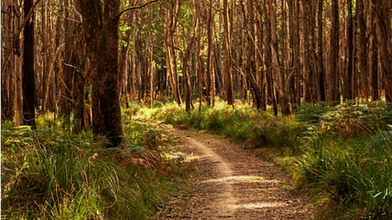 Wombat Trail walk Trentham, blog size for Weekend Escapes article.